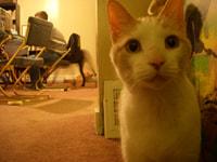 112. Big Cat