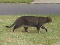 175. Outdoor Cat