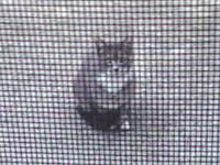 182. Outdoor Cat