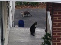 191-192. Neighborhood Cats