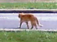 178. Street Cat