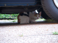 128. Cat I'm feeding outside