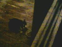123. Cat I'm feeding outside