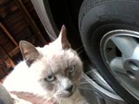 137. Cat in my garage