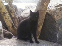 184. Miami Beach Cat