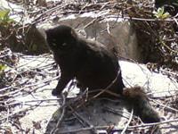183. Miami Beach Cat