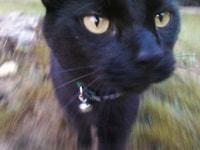 177. Professor Meow Meow