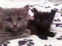 162-163. Kittens
