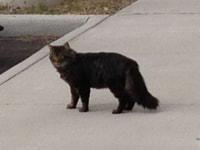 193. Outdoor Cat