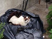 196-197. Sad Garbage Cats