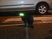 194. Street Cat