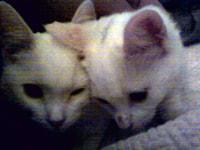 180-181. Kittens